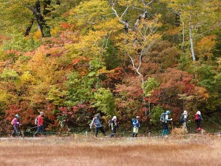 【Course A】Amou Natural Park Guided Tour ~Forest Trekking~