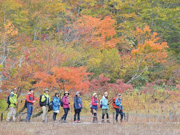 Amou natural Park   Guided Tour 2020      ~Walk in the primeval forest in North Hida colored with autumn leaves~